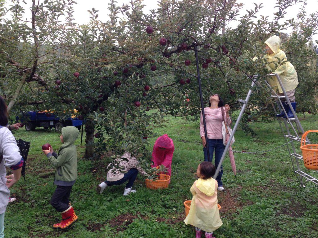 迷うリンゴ狩り